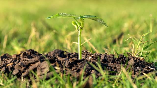 vídeos y material grabado en eventos de stock de semilla de tiempo lapso crecimiento nueva vida - hierba planta