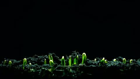 vídeos de stock e filmes b-roll de seedling growing time lapse blackground - crescimento