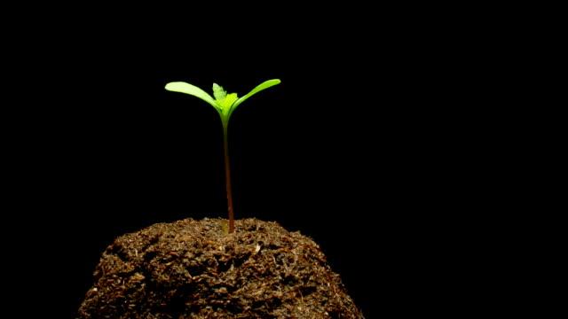 Seedling video