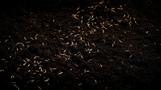 Seeds Are Scattered Onto The Soil