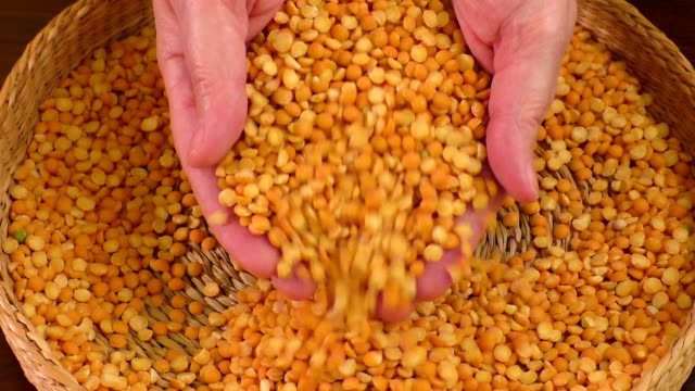 Seeds dried peas yellow lying in a wicker basket video