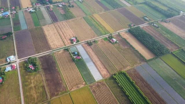 vídeos de stock e filmes b-roll de sekinchan padi field in the morning with fog - independência