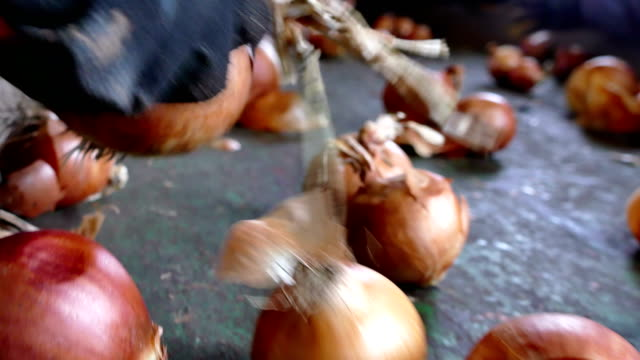 Selecting a Onion the Conveyor Belt Workers on the conveyor belt select  of the domestic red onion onion stock videos & royalty-free footage