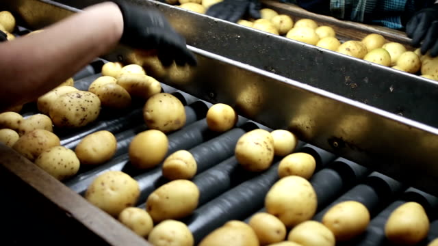Selecting Best Potatoes video
