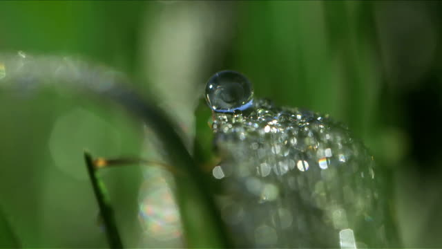 Selective focus and close up many droplets covering a green leaf video