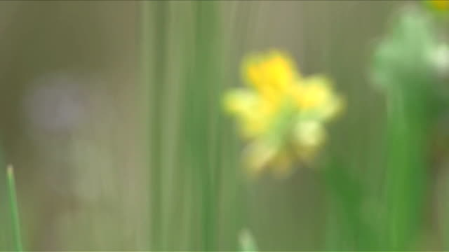 Selective focus and close up on wild flowers and grass video