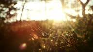 istock Selective focus footage of spider web in the meadow in light rain at sunset 1330683187