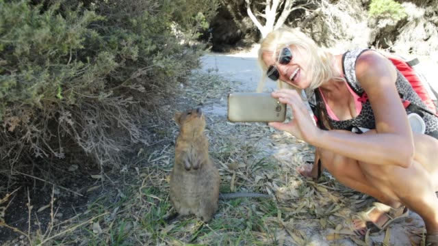 Selfie with Quokka video