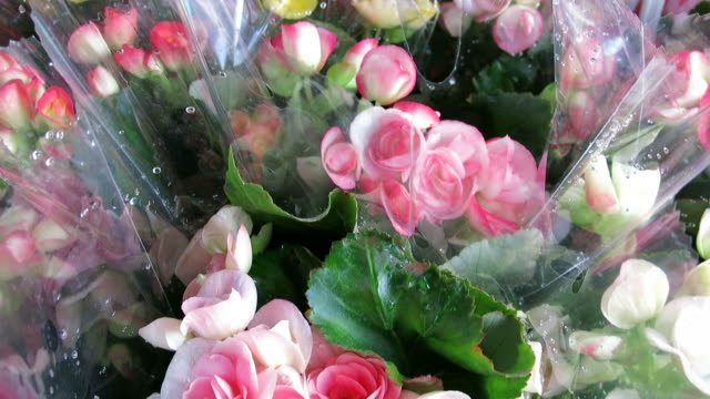 Selling flowers video