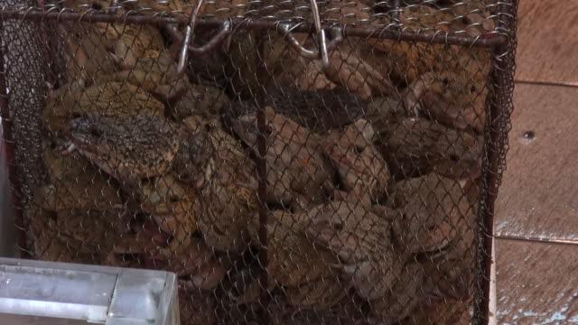 賣青蛙,街市,香港多彩的街頭美食生活 - 野生動物 個影片檔及 b 捲影像