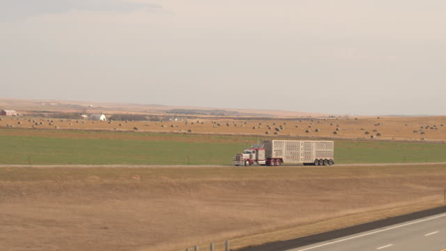AERIAL: Semi truck transporting livestock along the country road in Great Plains video