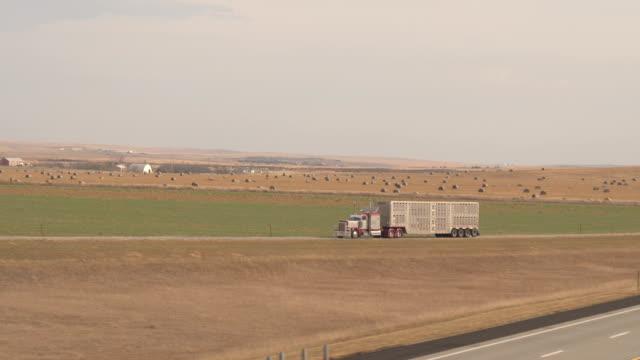 antenn: semi truck transportera boskap längs landsvägen i great plains - boskap bildbanksvideor och videomaterial från bakom kulisserna