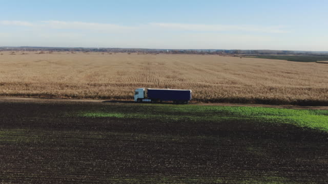 semi-truck with cargo trailer moving on dirt road. white truck drives through corn field background. - colza video stock e b–roll