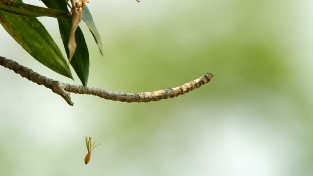 senescence flower is hanged under the twig video