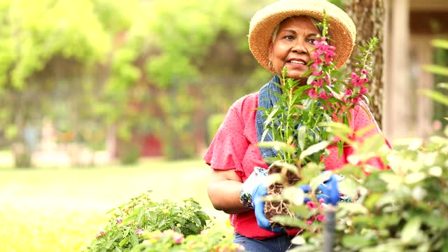 Senior adult woman enjoys gardening in home flower bed. video