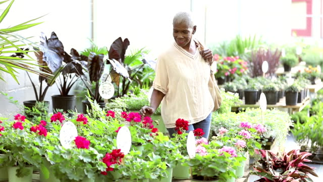 Senior African-American woman shopping in plant nursery A senior African-American woman in her 60s shopping for flowers in a garden center or plant nursery. short hair stock videos & royalty-free footage