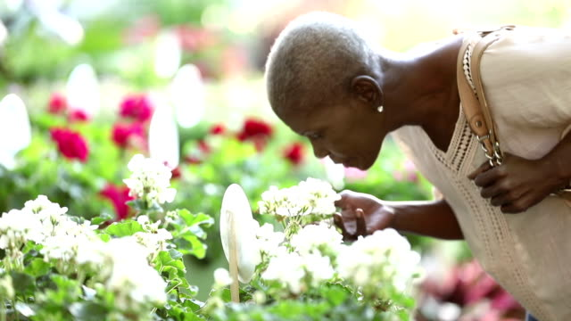 Senior African-American woman shopping in plant nursery A senior African-American woman in her 60s shopping for flowers in a garden center or plant nursery. She see only her midsection except when she bends down to smell the flowers. plant nursery stock videos & royalty-free footage
