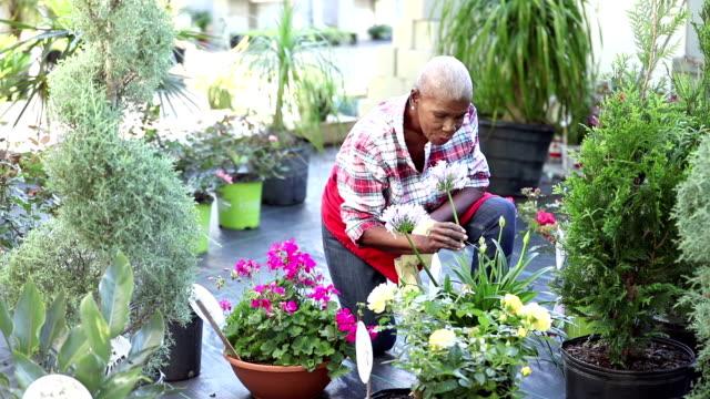 senior african-american woman working in garden center - gardening video stock e b–roll