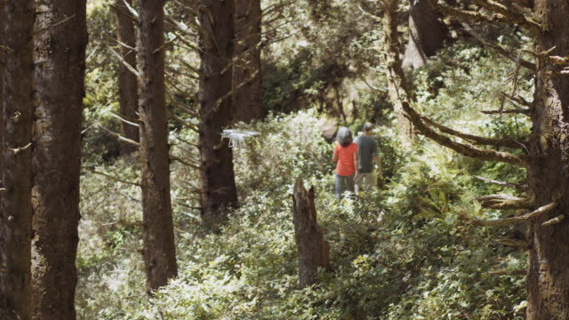 Senior aged couple hiking through an old growth forest video