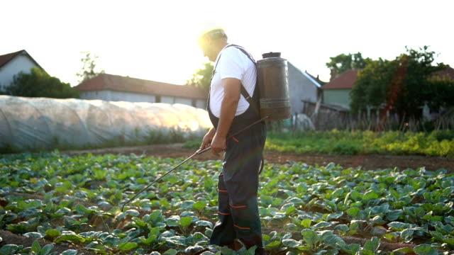 vidéos et rushes de senior agriculturist, épandage de pesticides plantation - herbicide