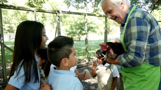 caucasico maschio anziano di un agricoltore tiene un pollo come insegna di un gruppo di studenti elementari privata di animale - viaggio d'istruzione video stock e b–roll