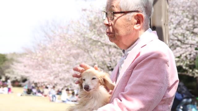 シニア ・桜の花 - シニア点の映像素材/bロール