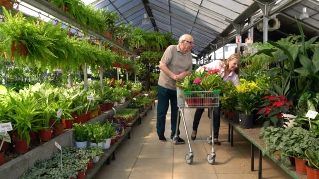 Senior couple buying plants for their home pushing a shopping cart and choosing plants while laughing and talking Happy senior couple buying plants for their home pushing a shopping cart and choosing plants while laughing and talking plant nursery stock videos & royalty-free footage