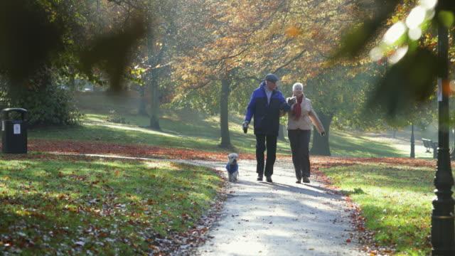 senior par walking deras hund - senior walking bildbanksvideor och videomaterial från bakom kulisserna