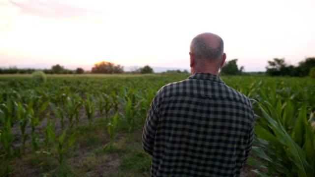 vídeos y material grabado en eventos de stock de agricultor mayor examinando su granja de cultivos - plantación