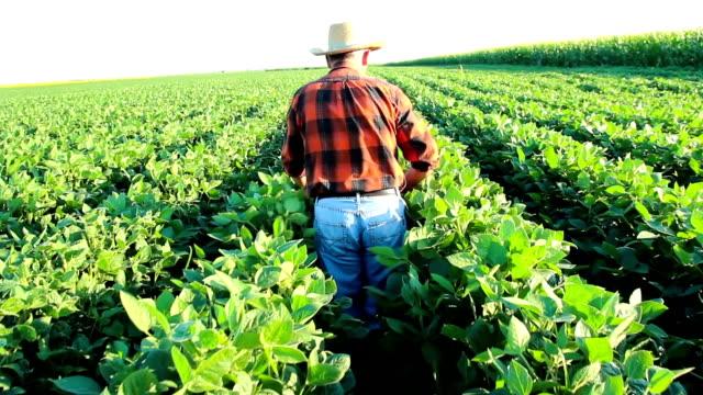 Senior farmer in a field examining crop video