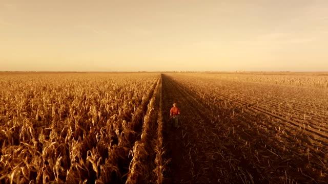 Granjero Senior en campo del maíz - vídeo