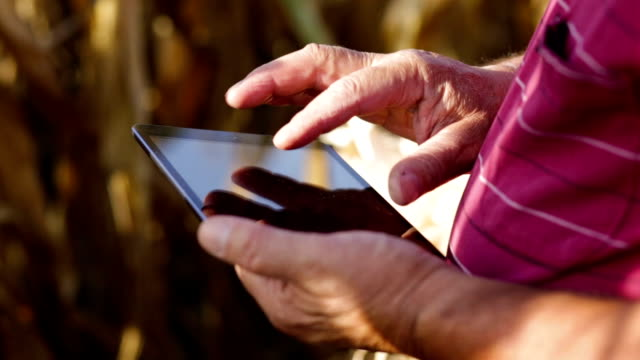 senior farmer in corn field with tablet. - rancher video stock e b–roll