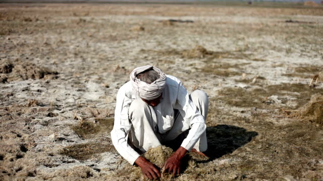 Senior farmer working in the field HD1080p: Senior farmer sitting & working in the field during winter season. He is cleaning field for new crop plantation. haryana stock videos & royalty-free footage