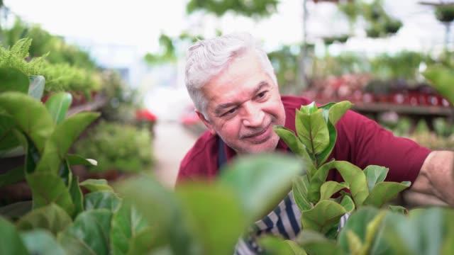 senior florist arranging some plnats in a shelf - gardening video stock e b–roll