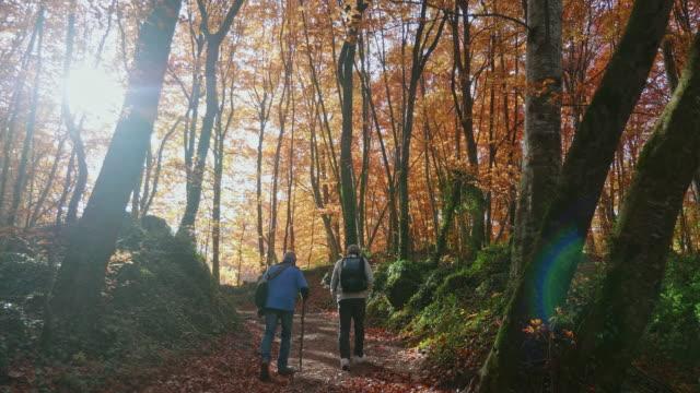 秋の森で太陽の下を歩く先輩の友人たち - バックパッカー点の映像素材/bロール