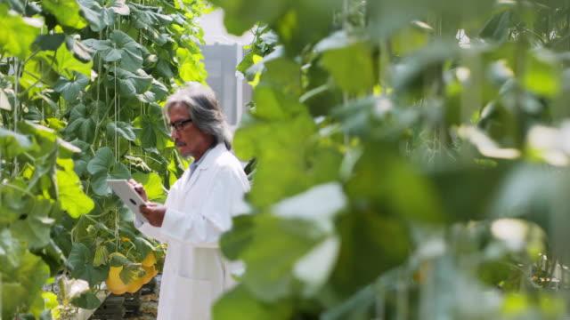 senior mannen agronom i vit rock med surfplatta fungerar övervakande fröplantas tillväxt i växthus. anläggningen vård och skydd koncept. industri 4.0 - vertikal bildbanksvideor och videomaterial från bakom kulisserna