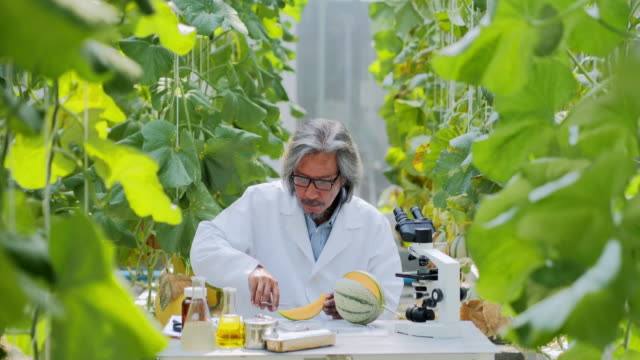 Senior man agronomist in white coat working supervising seedling's growth in greenhouse. Plant care and protection concept.Industry 4.0 Industry 4.0 :Senior man agronomist in white coat working supervising seedling's growth in greenhouse. Plant care and protection concept computer aided manufacturing stock videos & royalty-free footage