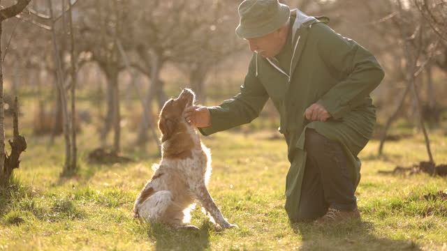 Senior man crouching in orchard field and stroking his dog