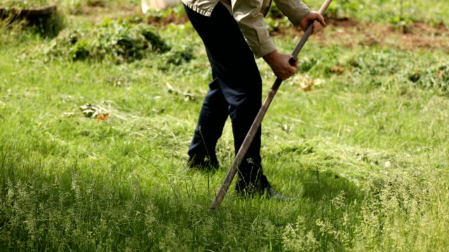 Senior man cutting green fresh grass with hand scythe - vídeo