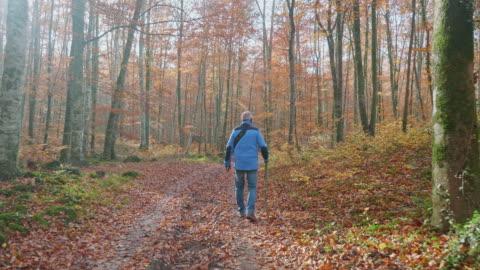 vídeos de stock e filmes b-roll de senior man hiking along autumn forest - andar