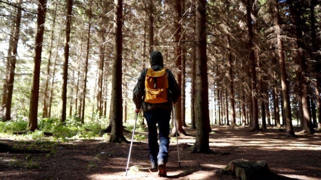 старший человек походы в лес - хвойное дерево стоковые видео и кадры b-roll