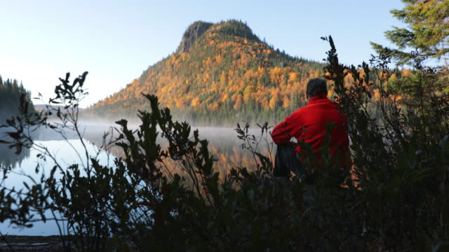vídeos de stock e filmes b-roll de senior man looking lake in forest nature, quebec, canada - man admires forest