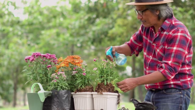 Senior man planting flower in a potting and watering it. Senior man planting flower in a potting and watering it. weeding stock videos & royalty-free footage