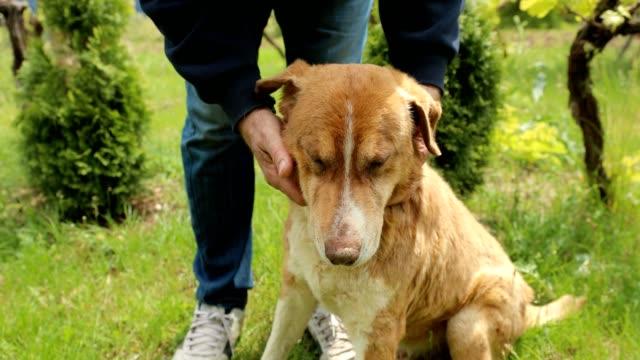 裏庭で彼の犬と遊んでいる老人 - イヌ科点の映像素材/bロール