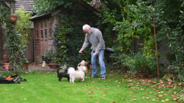 Senior man playing with pet dogs video