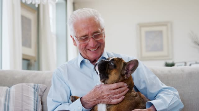Senior Man Sitting On Sofa At Home With Pet French Bulldog