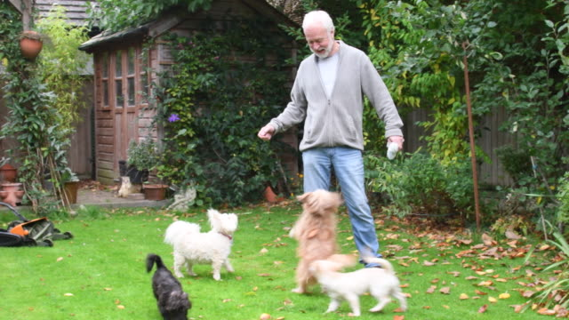 Senior man with pet dogs in back garden video