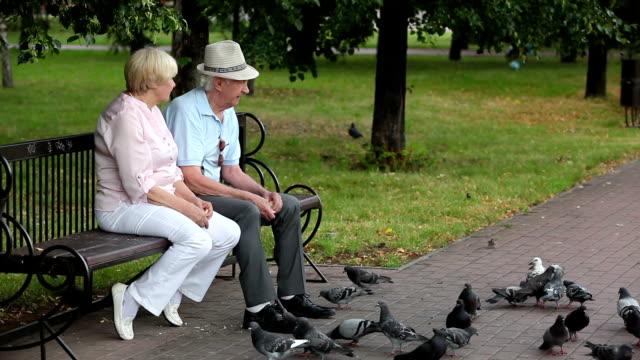 Senior pastime Lovely senior couple feeding pigeons in the park feeding stock videos & royalty-free footage