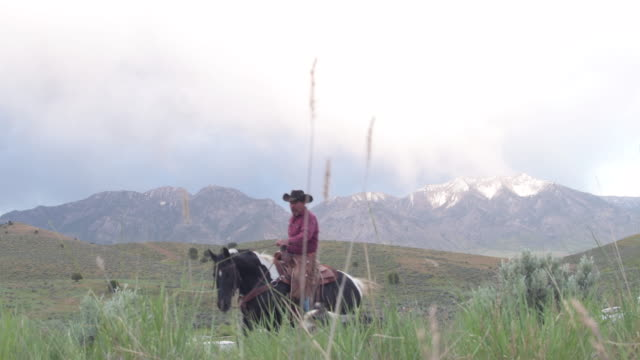 senior rancher rides up to stop on hill and take a look around - rancher video stock e b–roll