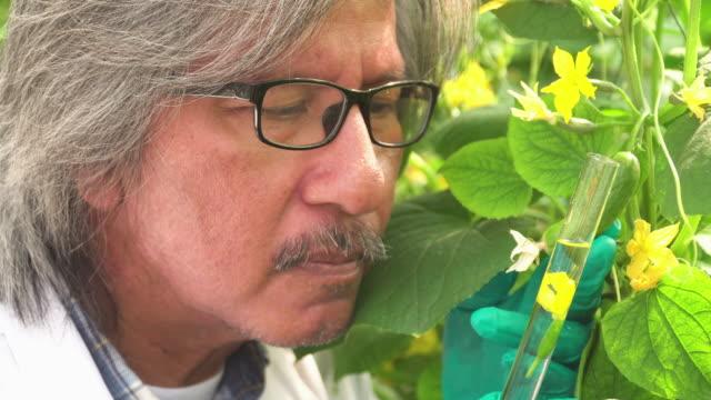 Senior scientist looking yellow flower of cucumber in test tube
